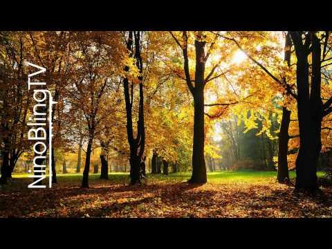 Sekouba Traore - Donson (boddhi Satva Ancestral Soul Remix) video