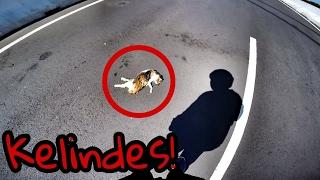 Liat Kucing Mati di Jalan?