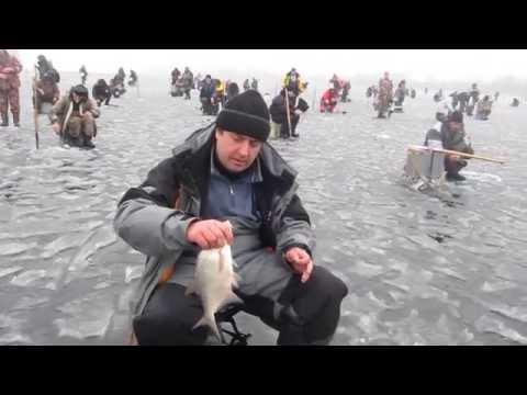 когда разрешена ловля судака на финском заливе