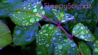 Forest Rain – 9 Hour Soundscape of Rain Falling on Leaves – sleep, ambiance, nature, ASMR
