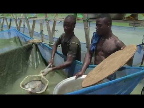 Ghana  Growing Fisheries