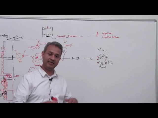 Immunology Lecture 1 Part 4