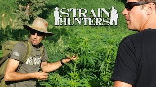Strain Hunters Documentary: Jamaica [Green House Seeds] HD