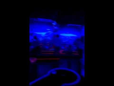 3D Minigolf Schwarzlicht Berlin