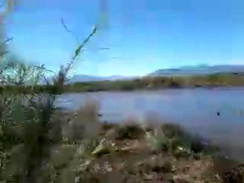 Caza de pato en cuncumen