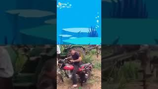 Funny monkey videos - funny animal video - funny videos #2