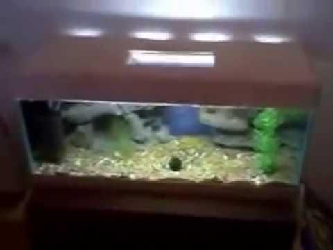 Самодельный для аквариума своими руками