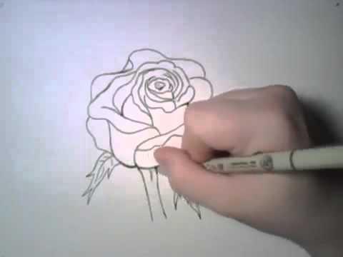 Ինչպես նկարել գեղեցիկ վարդ