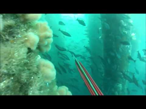 FILM SPEARFISHING NORWAY HD
