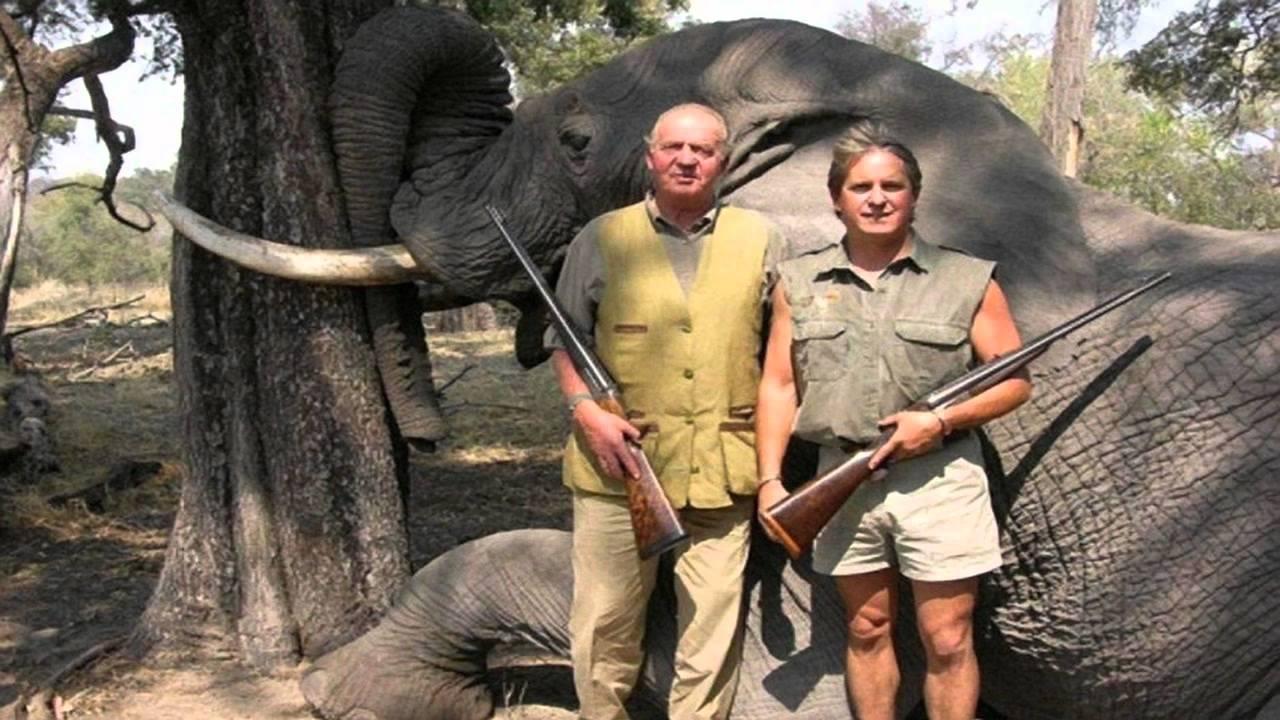 juan carlos elephant walk  mancini   spanish king shot