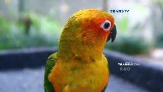 Wisata Taman Burung, Berwisata Sambil Belanja