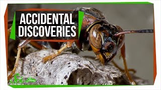6 Accidental Discoveries You