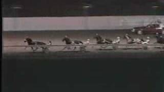 Breeders Crown 1984 2YRCP -- USTA Harness Racing