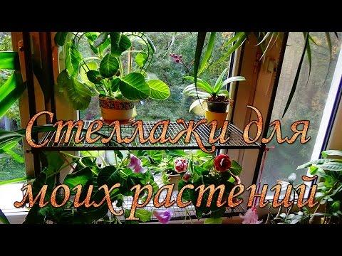 Мои окна и Стеллажи для растений