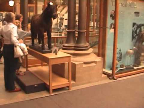 Oxford Museum of Nature part1
