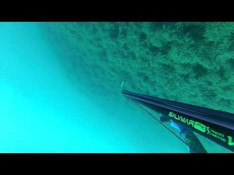 chasse sous marine en algerie merou 8kg400