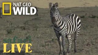 Safari Live - Day 40 | Nat Geo WILD