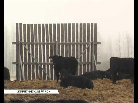 мираторг содержание скота зимой 13 02 15