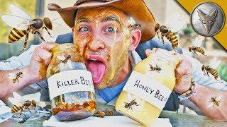 Is KILLER BEE Honey Dangerous?! by : Brave Wilderness
