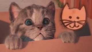 Fun Kitten Care - Little Kitten My Favorite Cat - Play Fun Cute Pet Care Animation Game For Children