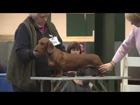 Birmingham National Championship Dog Show 2013 - Hound group