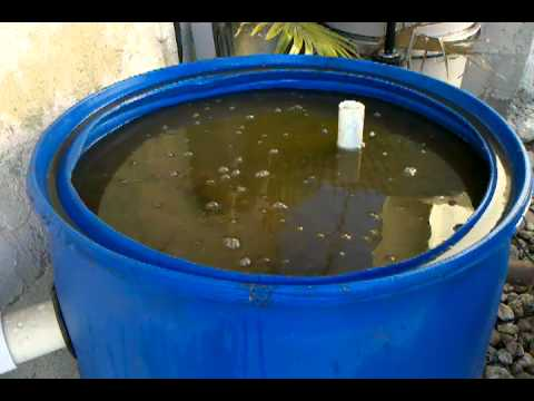 Diy best design for a koi pond filter cleaning youtube for Pond filter cleaning maintenance