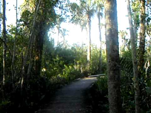 Royal Palm Hammock Nature Trail in Collier Seminole State Park Part Two.AVI