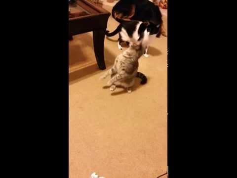 頭に異物が付いた猫の行動。