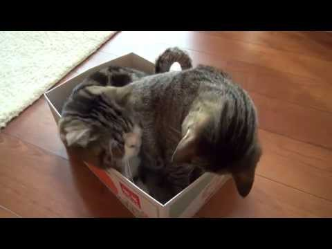 定員オーバーな箱とねこ。-The overload box and Maru&Hana.-
