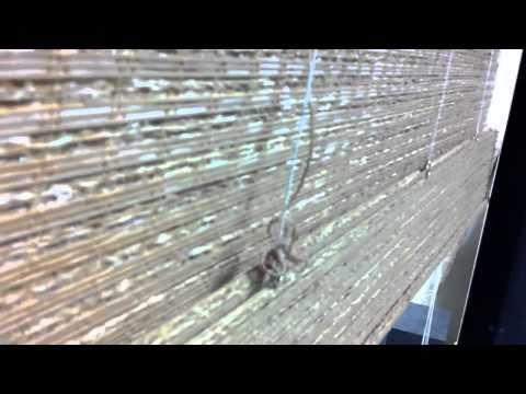 Roman shade cord shroud