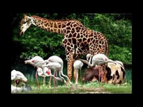 Zoo Taiping - Tourist Attractions in Malaysia