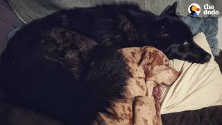 Woman With 2 Pit Bulls Takes A Chance On A Rescued Wolf Dog | The Dodo