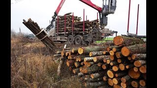 The fastest wood loading unloading I had ever seen with VOLVO FH16 650 timbertruck