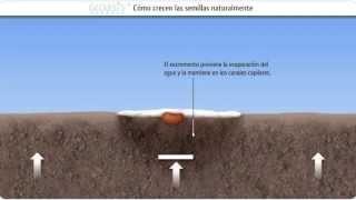 Tecnologia contra la desertificación