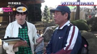 スクーピー・レポート「今が見頃!六地蔵寺のしだれ桜」〈水戸市〉IBS(2016.3.31)