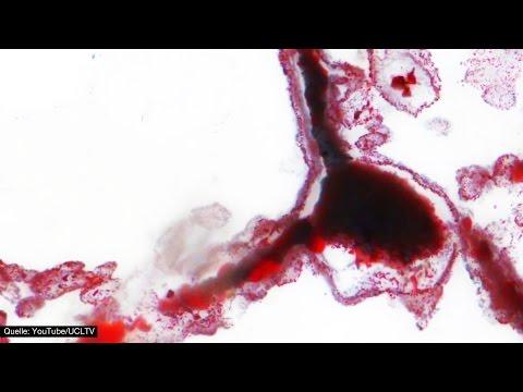 Fossilien geben Hinweise auf Außerirdisches Leben! - Clixoom Science & Fiction
