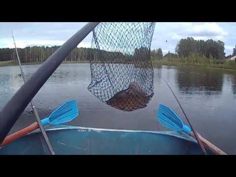 как ловить крупного карася на реке