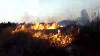 Rehovot, Weizmann Institute of Science in wild fire רחובות 4