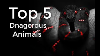 Top 5 Most Dangerous Animals in the World