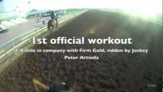 Patrician Snoop: Workout Jockey Cam at Turf Paradise