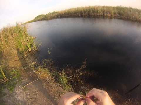 Largemouth Bass fishing Soutth Florida Monday 04-28-2014