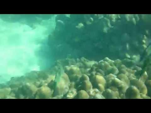 マレーシア・パヤ島 - Pulau Payar Marine Park, Langkawi, Malaysia. 1