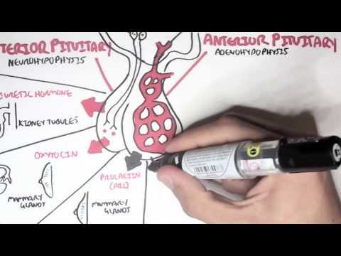 Endocrinology - Overview