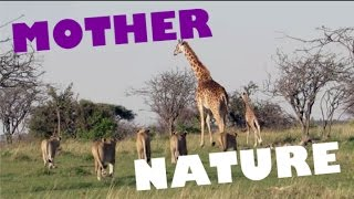 MOTHERS PROTECTING and SAVING their BABIES // Animal Compilation