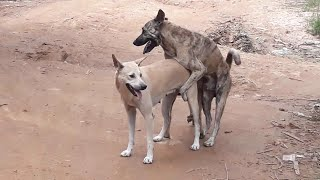 Street dogs Amazing Videos Real Dog Meeting On The Street ~ Funny Animals Pets And Rural Puppy