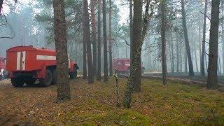 Рятувальники Житомирської області розповіли, хто допомагав гасити пожежу в Поліському заповіднику
