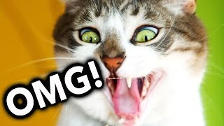 OMG! Cats on Youtube / Funny Cats - New Funny Cats Video - Funny Animals - Funny Videos