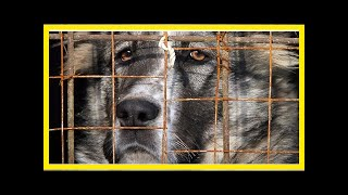 | Dog Rescue Stories3 Things Affect Dog Adoptions – You Won't Believe How Easy It Is To Do #3