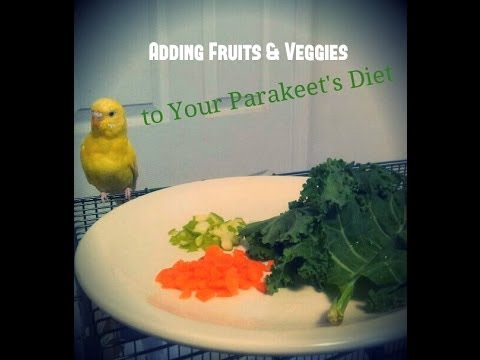 Adding Fruits and Vegetables to Your Parakeet's Diet