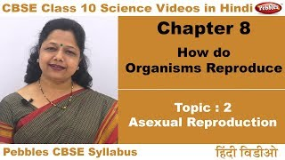 Class 10 | CBSE NCERT | Science | Ch 8 | Organisms Reproduce | T2 | Asexual reproduction | Hindi